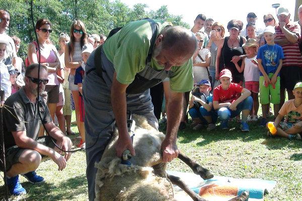 Divákov zaujalo aj strihanie oviec.