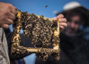Tento rok bol pre včely zlý, včelári ich museli dokrmovať.