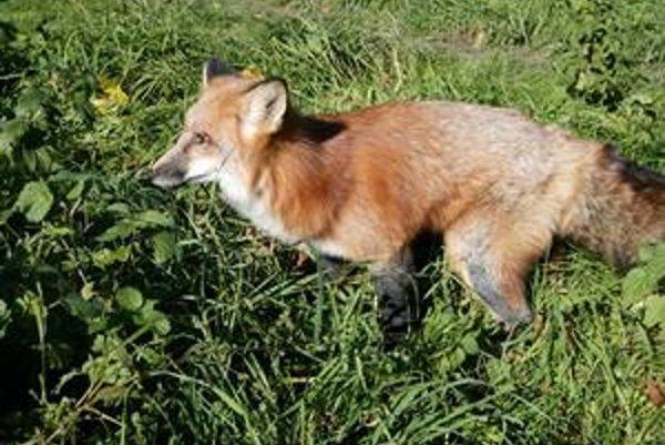 Poľovačka sa uskutoční v nedeľu 16. októbra.