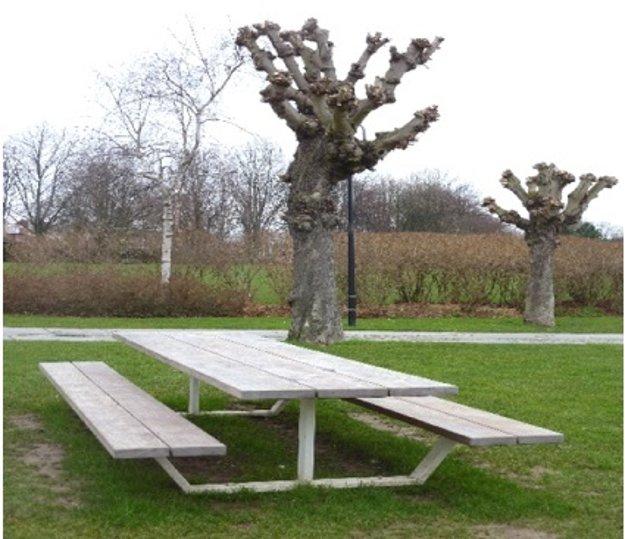 Zmrzačené stromy? Imelo síce patrí k Vianociam, no je to parazit, ktorý vážne poškodzuje dreviny. Ak sú na strome desiatky ružíc imela, dokážu strom zničiť tak, že mu už často niet pomoci. Ako tomu predísť? V  Bruseli sa o stromy starajú tak, aby boli zdravé. Mohlo by sa zdať, že ide o drastické opatrenie, opak je však pravdou.