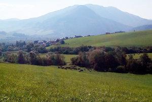 Časť stáda, ktoré napadnutý Slavomír pásol spolu skolegom nad Párnicou.