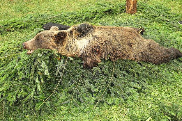 Tomuto medveďovi zastrelenému na hornej Orave chýbala ľavá predná laba.