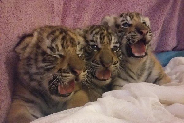 """""""Mačiatka"""" sa majú k svetu."""