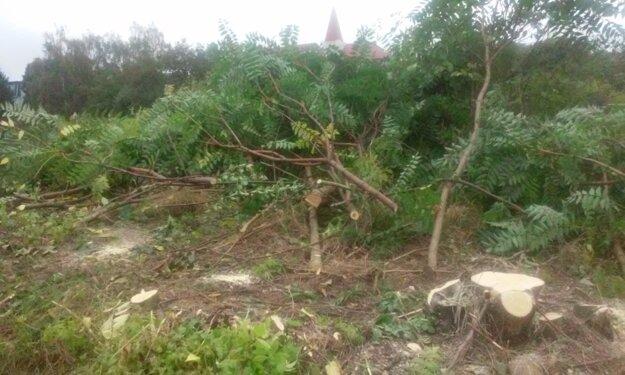 Na parcele sa darilo náletovým drevinám.