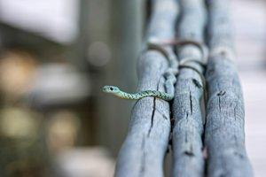 Pred miliónmi rokov sa hady nemuseli plaziť. Pohybovali sa po vlastných nohách.