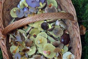 Košík s jesennými hubami.