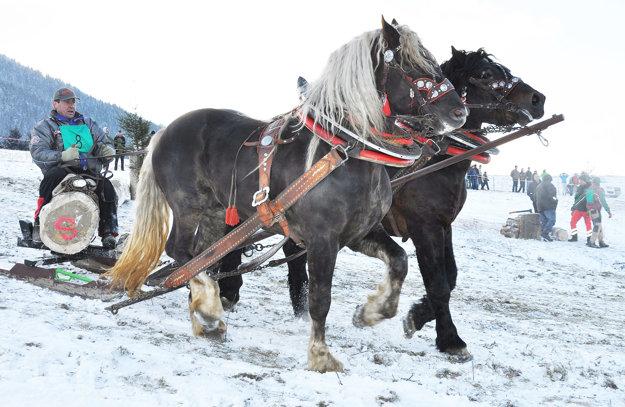 Na furmanských pretekoch sa stretávajú kone využívané v lese.