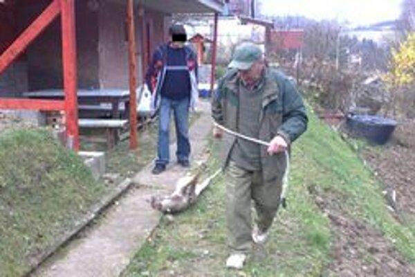 Zrazená srna skončila u poľovníkov.