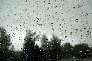 Jedným z riešení, ako sa vysporiadať s vodou na pozemku, sú dažďové záhrady.