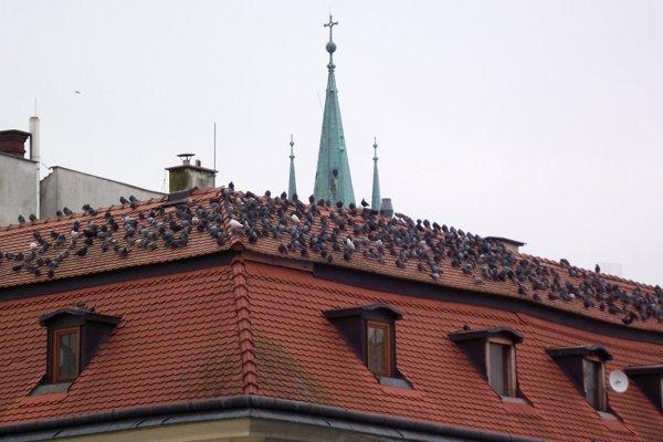 Holuby na streche domu na pešej zóne - na rohu Štefánikovej a Kupeckej.