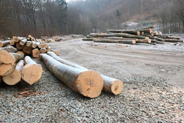 Žiadne tintítka. Lesníci odľahčili svah aj o takéto statné stromy.