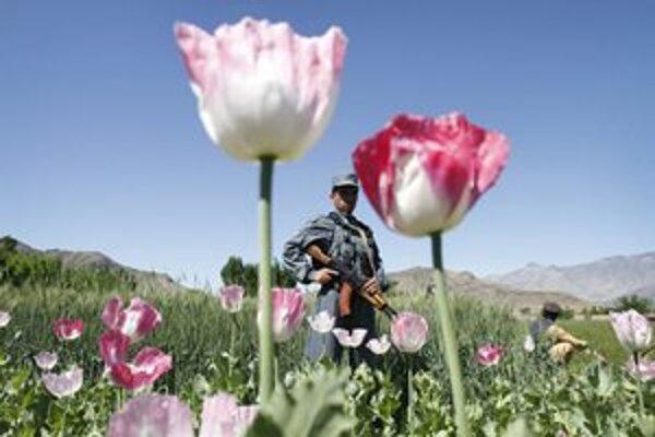 Afgánsky policajt na ópiovom poli.