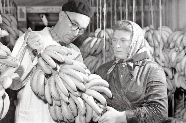 Rok 1959: Kontrola dozrievania banánov.