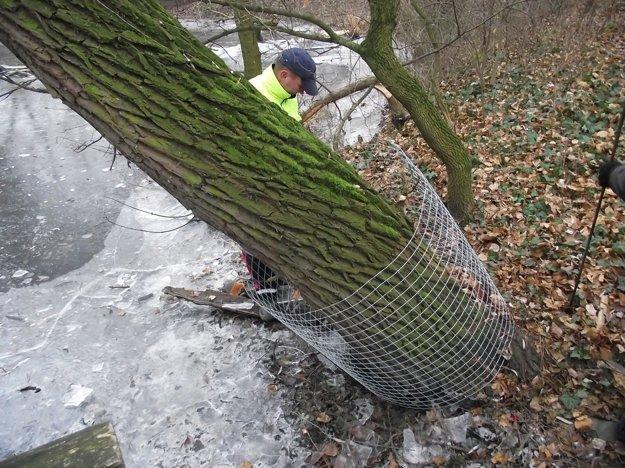 Stromy oplocovali aj v tomto týždni.