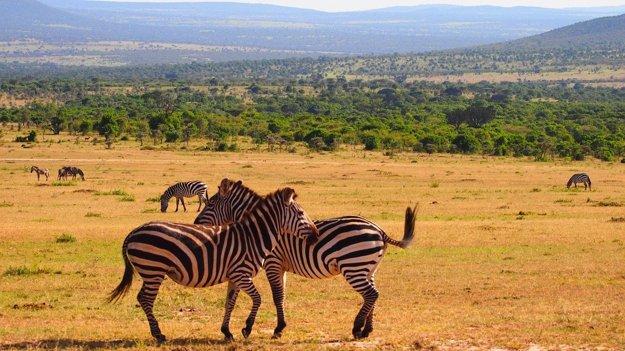 Keňa je výborná destinácia v Afrike pre milovníkov divočiny.