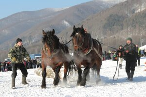 Kone a ich majitelia museli vydať zo seba všetko.
