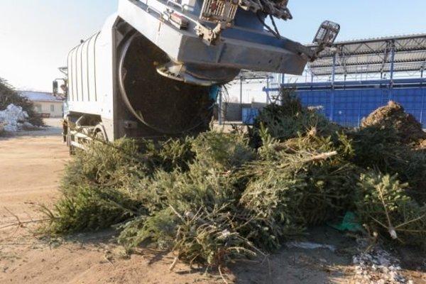 Stromčeky končia v mestskej kompostárni.