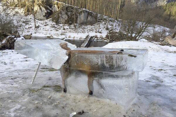 Zamrznutá líška.