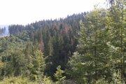 Lesy mesta Brezno - nové ohniská kalamity sa objavujú každý deň.