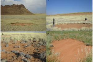 Vedci skúmajú Namibské kruhy v rámci štúdie z roku 2013, ktorá ich tvorbu pripisovala len miestnej vegetácii.