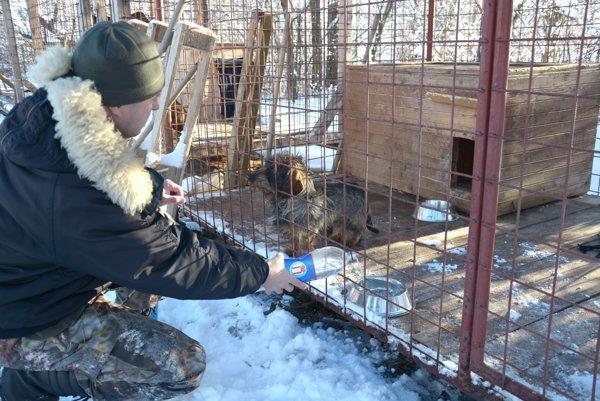 Majiteľ ajazvečík Garfield. Poľovnícky pes ustál strelné poranenia.