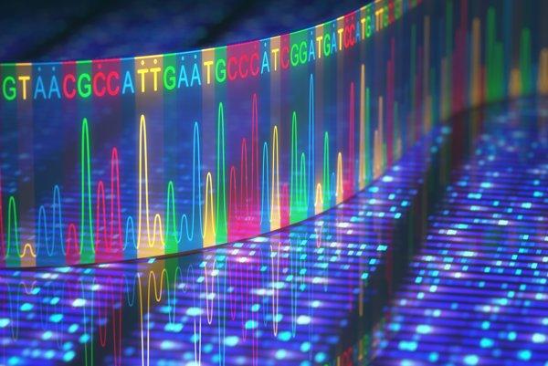 Geneticky upravená baktéria E. coli je prvý organizmus na svete, ktorý sa skladá z viac ako štyroch základných nukleových báz A, T, C a G.