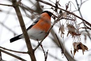 V tuhých mrazoch vtáky potrebujú pomoc.