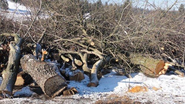 Pílam podľahli aj stromy, ktoré majú v obvode viac ako povolených 40 centimetrov.