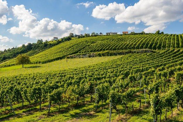 Oblasť medzi Neziderským jazerom a regiónom Weinidylle je charakteristická kvalitným vínom.