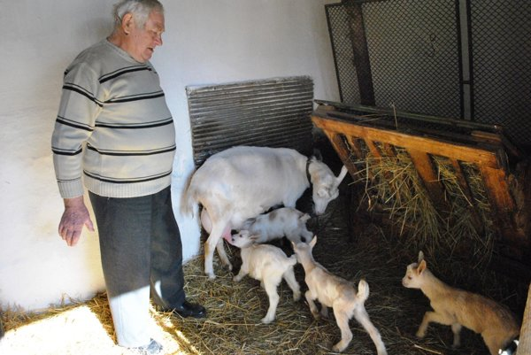 Pán Matej pri štyroch kozliatkach aich mame.