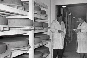 Zrecie komory v Západoslovenských mliekarňach Bátovce. Riaditeľ prevádzkarne Ondrej Sallay a technička Emília Vinklerová zisťujú kvalitu zrenia. Foto: archív TASR, autor I. Dubovský/30. novembra 1962