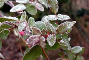 Mrazy môžu ohroziť hlavne záhradkárov.