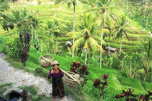 Štrnásť vecí, ktoré zažiť v Ubude na Bali
