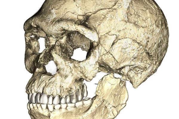 Rekonštrukcia ľudských fosílií zo zložených obrázkov z CT snímok viacerých vzoriek.