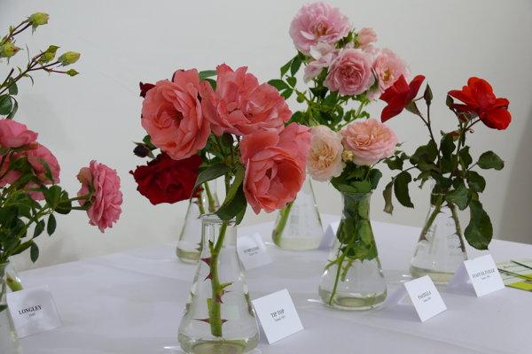 Výstava ruží.