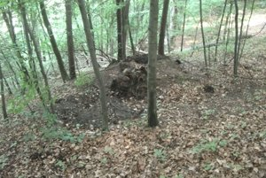 K objavom v lokalite prispela náhoda - vyvrátený strom.