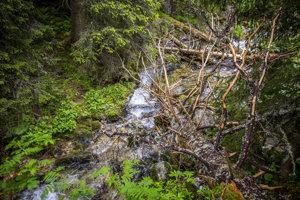 Prirodzené prehrádzky ako táto sú na Slovensku výnimočné. Padnuté stromy cez rieku spomaľujú odtok vody a vytvárajú priestor pre rôznorodé živočíchy.