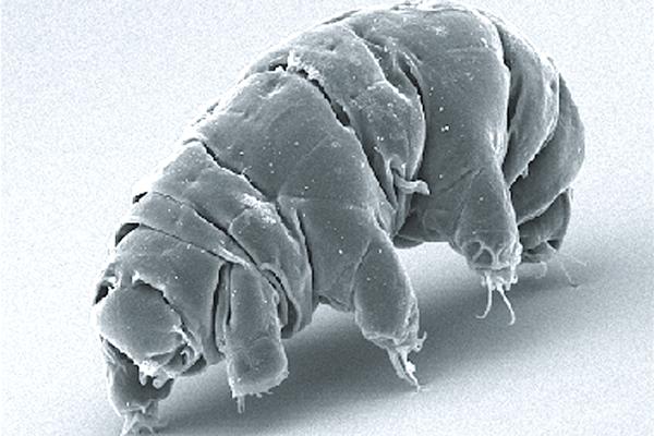 Tardigrady prežijú mnohé nepriaznivé podmienky. No ich odolnosť má hranice.