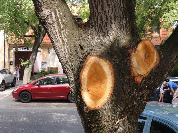 Opílenie stromov je značné.