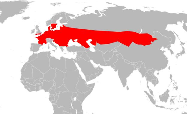 Mapa výskytu jašterice krátkohlavej.