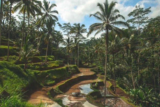 Ryžové terasy Tegalalang v centrálnej časti Bali