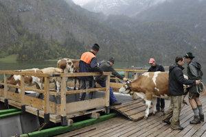Bavorskí farmári prichádzajú s dobytkom na loď počas návratu z letných pastvín pri jazere Königssee neďaleko Berchtesgadenu.