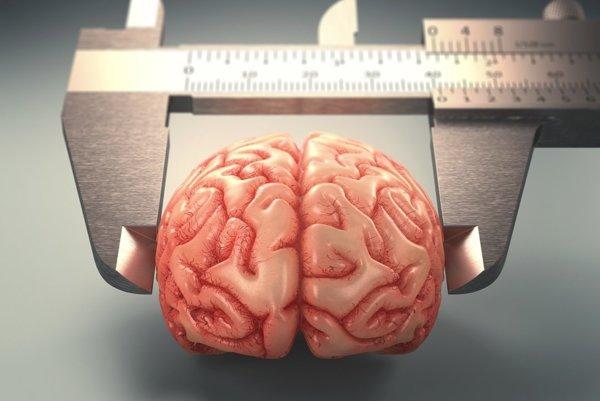 Brušný tuk ohrozuje dokonca aj mozog.
