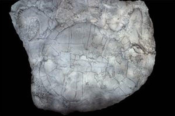 Fosília druhohornej korytnačky, ktorá sa našla na ostrovoch kanadskej Arktídy. Žila tam pred približne 90 miliónmi rokov. Jej predkovia - sladkovodné korytnačky z vtedajších ázijských trópov - tam zrejme priplávali priamo od Sibíri, neputovali cez Aljašku