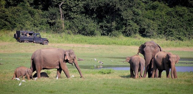 Na Srí Lanke zažite safari za slonmi.
