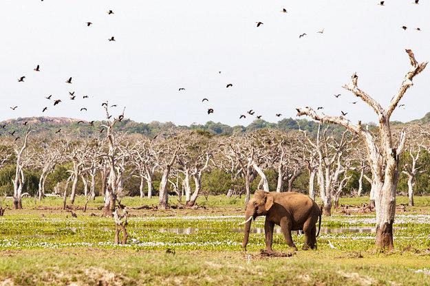 Pozorovanie slonov vo voľnej prírode