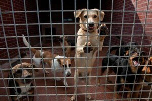 V Mestskom útulku pre psov v smere na letisko o 14.00 h môžete prísť potešiť psíkov chutnými dobrôtkami.
