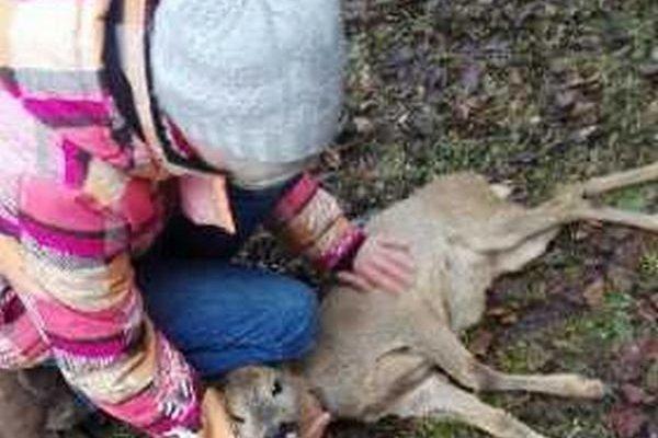 Zranené zviera dostalo pomoc.