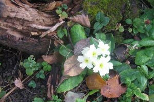 Namiesto sneho rozkvitnuté kvety a pučiace stromy