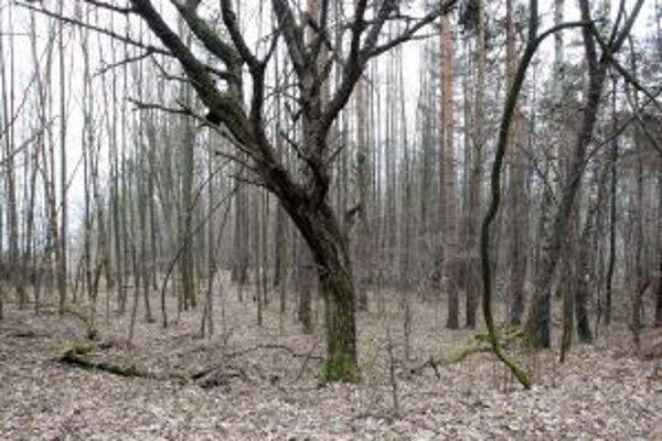 Urpínsku lesostep chcú zachovať